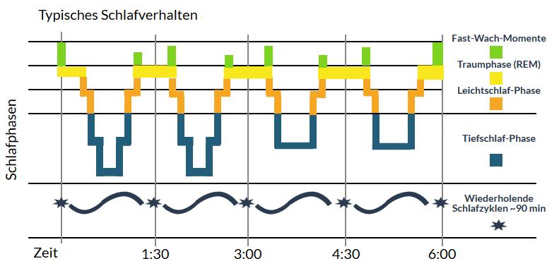 zyklen der schlafphasen